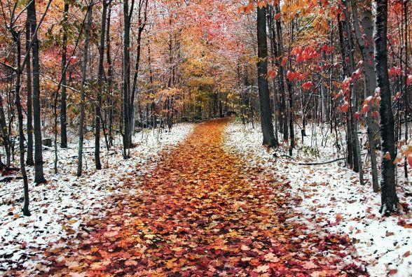 Головний синоптик розказав, коли в Україні варто чекати на перший сніг
