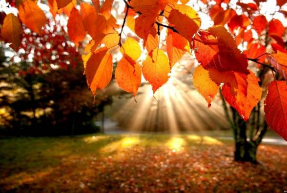 Тепла осінь закінчується. Синоптик розказала про погоду на п'ятницю