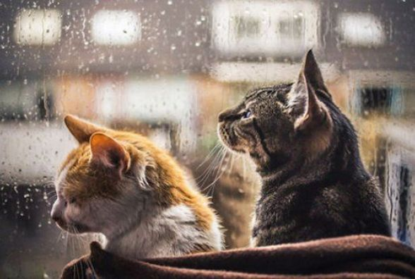 На Вінниччину йдуть дощі та різке похолодання. Прогноз погоди на завтра