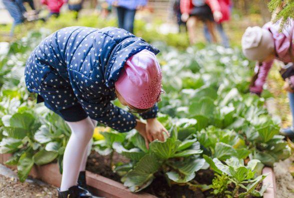 У центрі міста юні вінницькі фермери зібрали урожай овочів. Їм необхідно ще насіння квітів