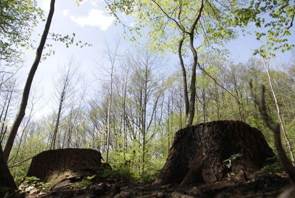 Чоловіків, які вирубали в Калинівському районі дерев на понад 180 тисяч гривень, судитимуть