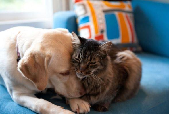 На котах і собаках зроблять мільярди? Закон про тварин прозвали маразмом року