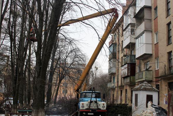 Конфлікт інтересів: жителі будинків по вулиці Порика не поділили дерева