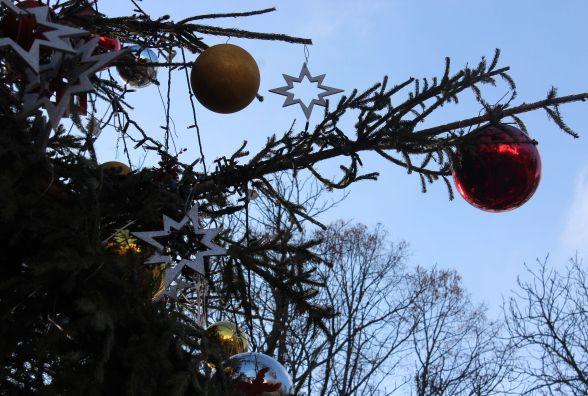 """Куди подіти """"живу"""" новорічну ялинку після зимових свят?"""