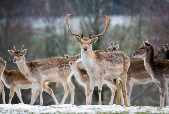 В ліс під Вінницю завезуть десять оленів. Вони житимуть у вольєрі