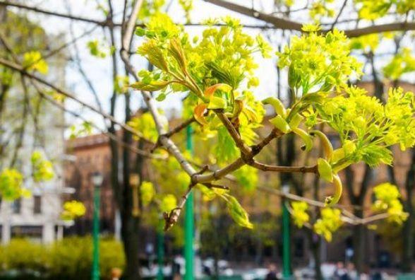 Прогноз погоди у Вінниці на сьогодні, 17 квітня 2018 року