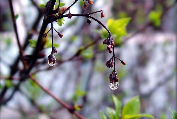 Дощ та похолодання. В Україну завітає атмосферний фронт