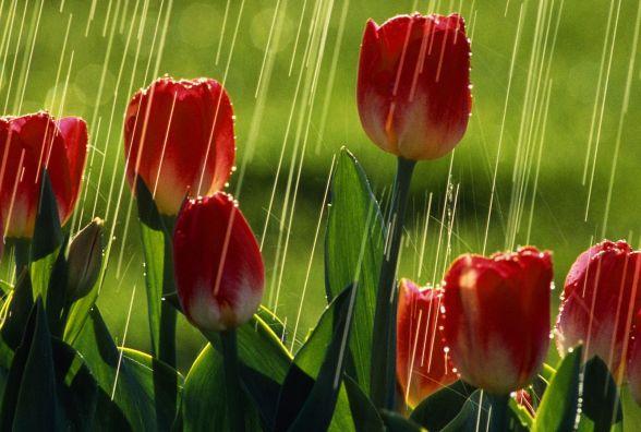 То холодно, то тепло: синоптик про погоду на кінець квітня