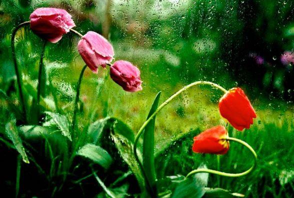 Яку погоду чекати вінничанам 26 квітня. Прогноз