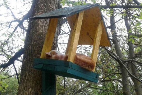 Фото дня: Грізних вінницьких синичок підгодовують котами