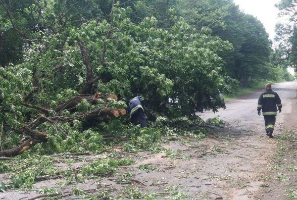 На Вінниччині четверо рятувальників прибирали повалене дерево з дороги