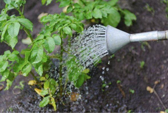 «Доведеться побігати з поливайками»: синоптик про погоду на найближчі дні