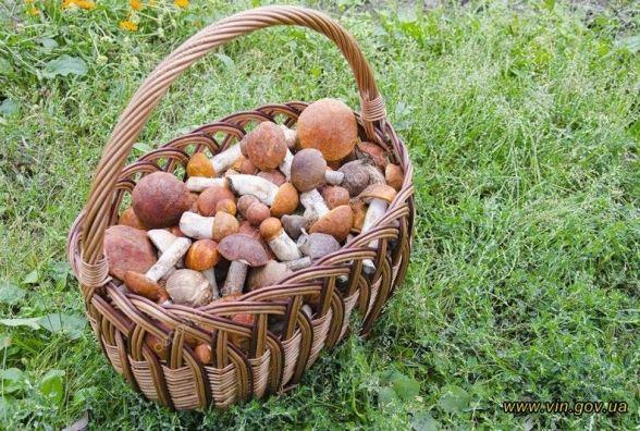 Щоб не стати жертвою «грибного полювання»: правила збирання та приготування