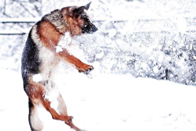Синоптики: в суботу, 21 січня, в Україні почнуться погодні зміни