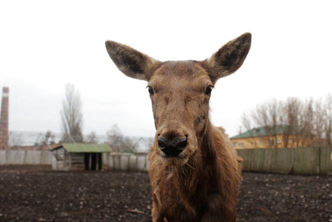 У Подільському зоопарку тварин сховали від холодів в утеплені будиночки