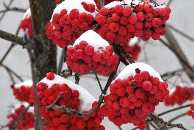 Погода у Вінниці на сьогодні, 6 лютого