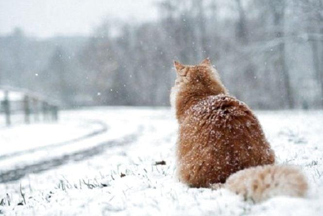 Погода у Вінниці на сьогодні, 5 лютого