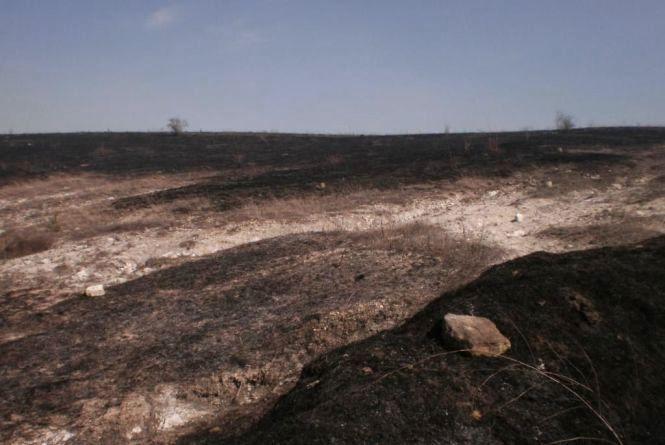 У Могилів-Подільському хтось підпалив гектар сухої трави