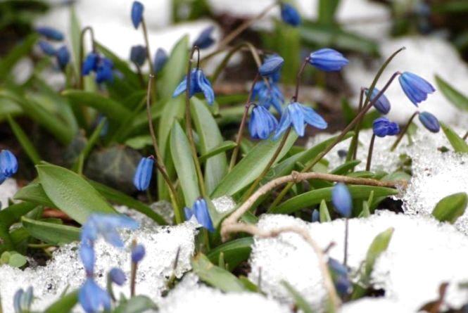 «Ура! Весна прийшла!» – вінничани в соцмережах радіють першому дню весни