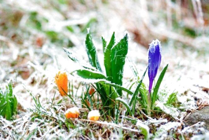 В Україну прийде похолодання. Синоптик розказала, коли очікувати приморозків