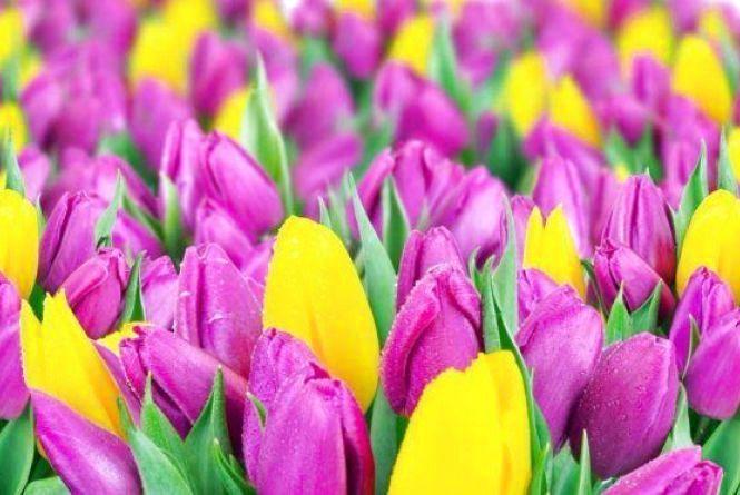 «Всі дівчата у квітах, цукерках та подаруночках», - френдстрічка вінничан на 8 березня