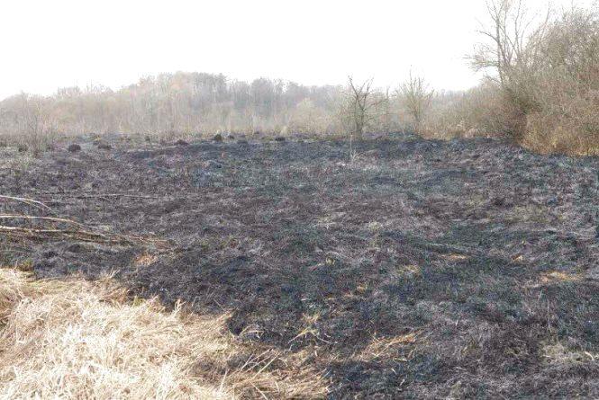 Біля Гніваня рятувальники ліквідували масштабну пожежу в екосистемі (ФОТО)