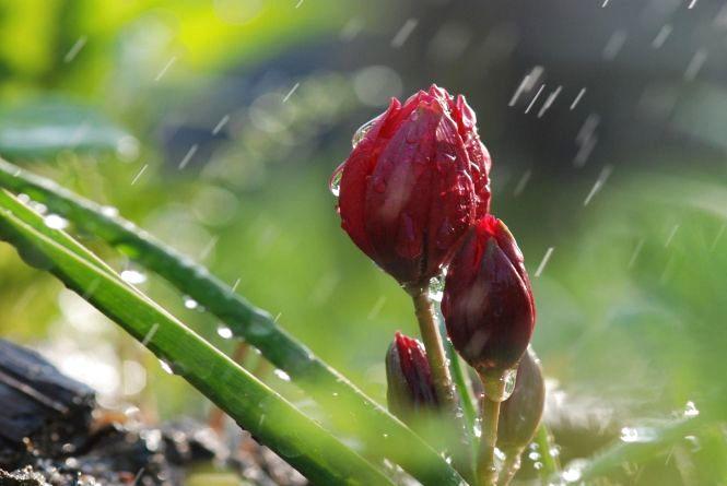 Синоптики попередили про складні погодні умови до кінця тижня