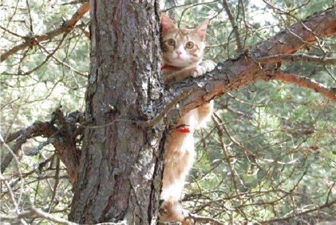 На Замостянській добу на дереві сидів кіт. Його знімали рятувальники