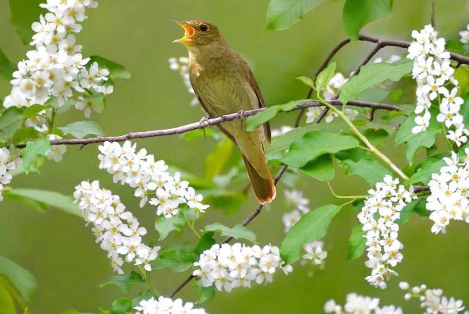 Народний календар на 9 травня: садіть горох та слухайте солов'я