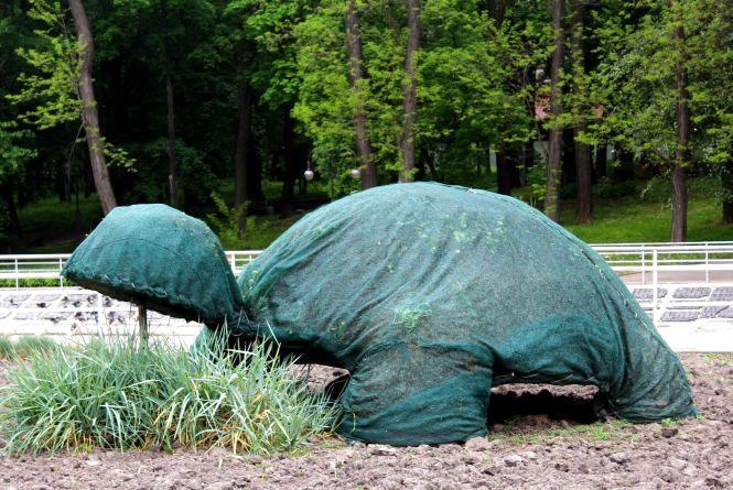 Зелені скульптури: у нашому місті їх можна зробити самостійно з моху і очиток