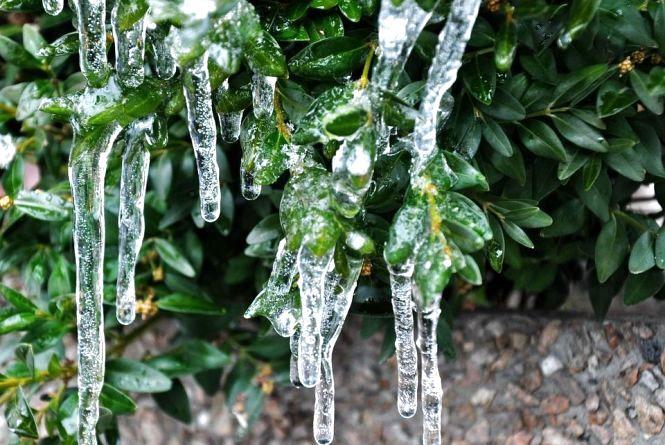 Синоптик попередила, що в Україні знову очікуються заморозки