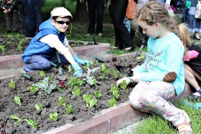 Город у центрі Вінниці. Діти саджали капусту-«агресор», помідори та салат