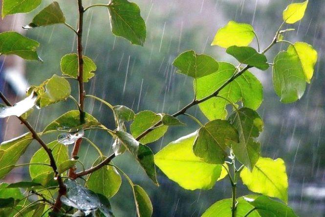 Коли чекати тепла та де завтра пройдуть «ймовірні дощі непогані». Прогноз погоди