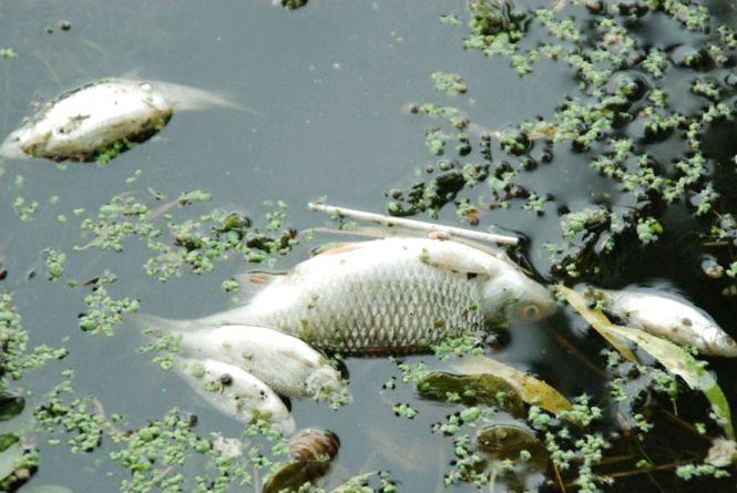 У Тростянці загинула в ставку риба. Збитки перевищують 9 тисяч гривень