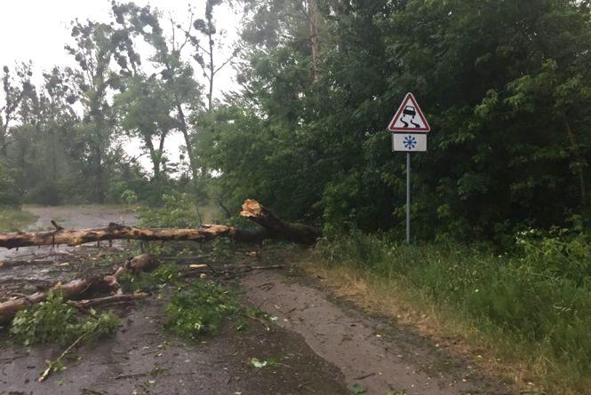 Буревій на Вінниччині: повалені дерева падали на дороги в п'яти районах
