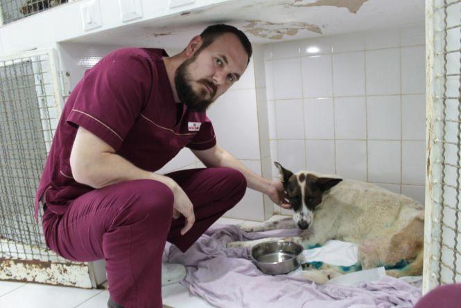 Швидка допомога для тварин: скільки коштує та як лікують?