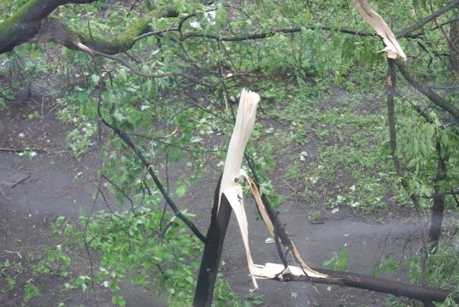 Буря ще до Вінниччини не дійшла, а дерева вже падають на дорогу