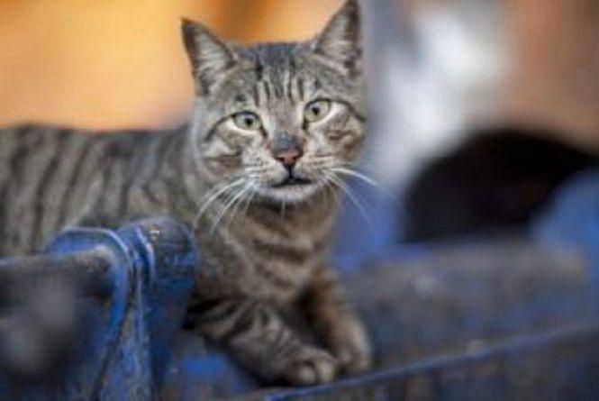 У тунелі теплотраси застряг кіт. Звільняли його рятувальники