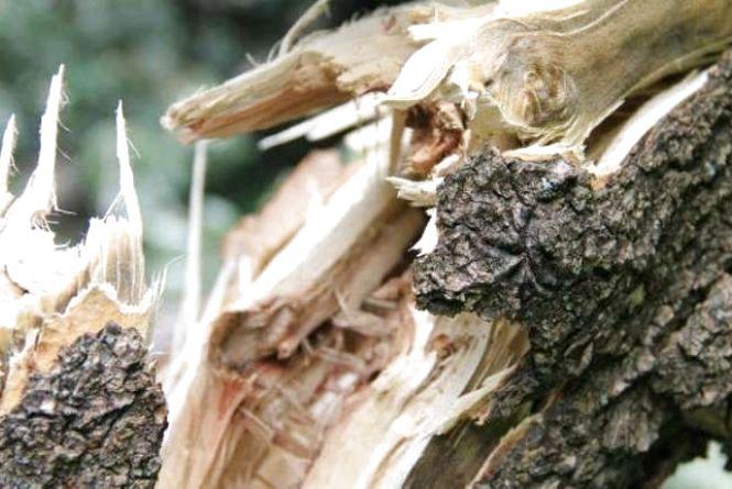 На одне із поштових відділень області вітер повалив дерево