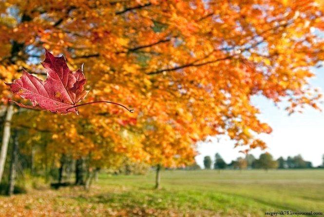 Сьогодні – Іони: чому варто остерігатися сильного вітру. Історія свята