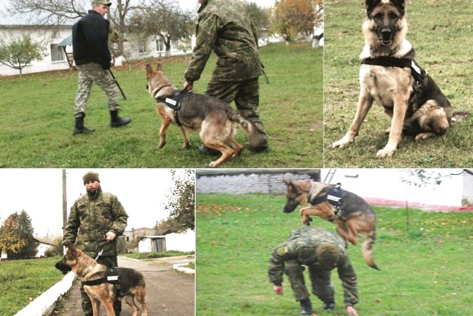 Професія: поліцейська собака. Як чотирилапі «копи» шукають зброю, злочинців та м'ячик