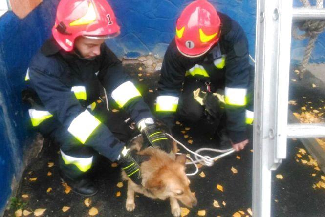 На Келецькій на даху «Сільпо» сиділа собака. Тварині допомогли рятувальники