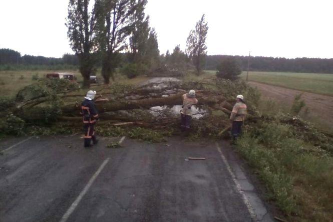 Буря на Вінниччині: Дерева валились на дороги. П'ять районів залишились без світла