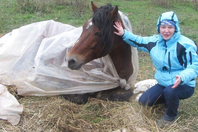 На порятунок коня зібрали за добу 3000 гривень, але…