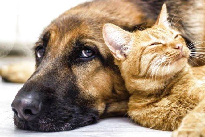Що страшного у законі про тварин? Норми, обов'язки та штрафи в інфографіці