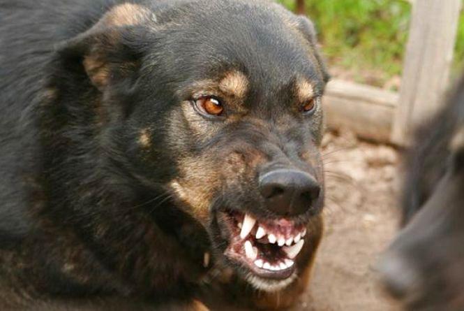 На Немирівщині за рік виявили тринадцять скажених котів та собак