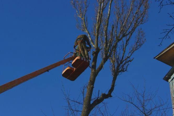 Під корінь. Що робити, якщо у вашому дворі невідомі пиляють дерева