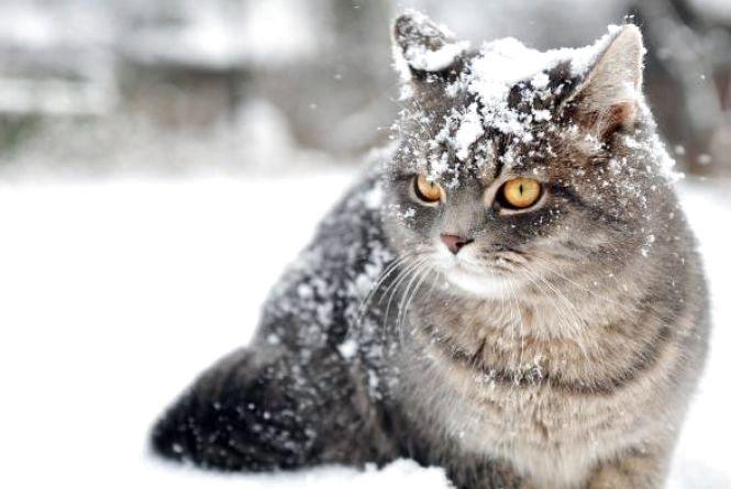 Завтра Стрітення. Вінничан очікує сніг, магнітні бурі та Сонячне затемнення