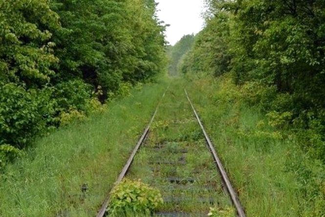 """У вінницькому лісі природа створює """"Тунель кохання"""""""