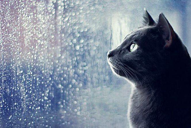 Дощ та вітер затримається до суботи, а там на вінничан чекає похолодання